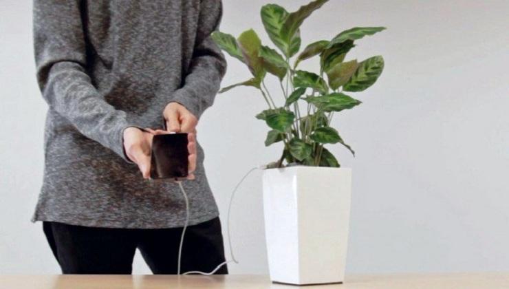 Soon it will be possible charge your Smartphone with just the Power of a Plant