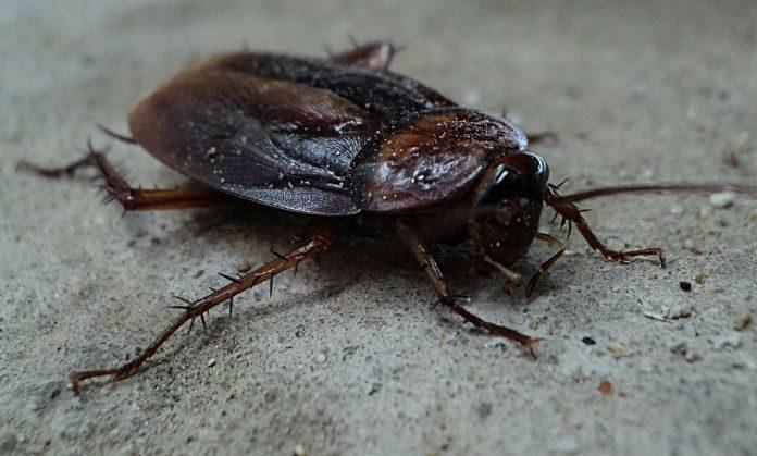 cockroach-milk-696x419