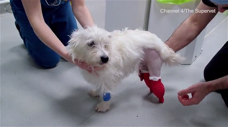 Puppy's life is saved by Futuristic Bionic Feet